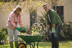 Portrait of cheerful senior couple carrying plants in wheel borrow. At yard royalty free stock photo