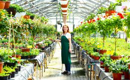 Portrait of a cheerful working woman in a nursery - Greenhouse w. Ith colourful flowers for sale Royalty Free Stock Images
