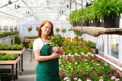 Portrait of a cheerful working woman in a nursery - Greenhouse w. Ith colourful flowers for sale Stock Photo