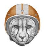 Portrait of Cheetah with Helmet. Stock Photos