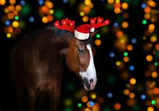 Horse in Christmas decoration stock images
