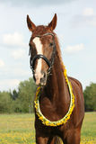 Portrait of chestnut horse with dandelion circlet Royalty Free Stock Photos