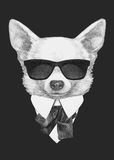 Portrait of Chihuahua in suit. Hand drawn illustration Royalty Free Stock Photos