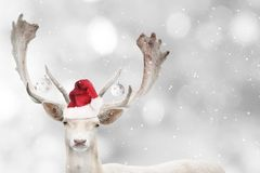 Portrait of Christmas santa white fallow deer. royalty free stock photos