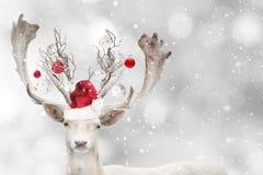 Portrait of Christmas santa white fallow deer. royalty free stock images
