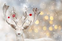 Portrait of white fallow deer with decorative balls. stock images