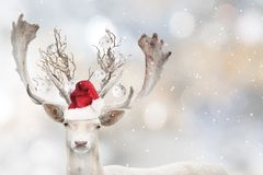Portrait of Christmas santa white fallow deer. royalty free stock images