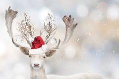 Portrait of Christmas santa white fallow deer. Portrait of Christmas santa white fallow deer in winter time. Beautiful bokeh background royalty free stock images
