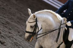 Portrait close up of dressage sport horse with unknown rider Stock Photography