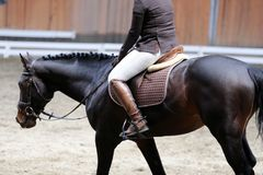 Unknown contestant rides at dressage horse event indoor in riding ground. Portrait close up of dressage sport horse with unknown rider.Sport horse portrait stock image