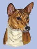 Portrait coloré de dessin de main de vecteur de Basenji Illustration de Vecteur