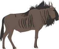 Portrait of a common wildebeest, standing, viewn from side. Hand drawn vector illustration  on white background Royalty Free Stock Image