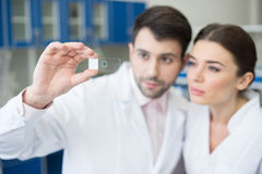 Portrait of concentrated scientists looking at microscope slide Stock Photography