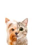 Portrait conceptuel d'un chat et d'un chien de moitié d'un visage Photos libres de droits