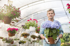 Portrait of confident gardener holding flower pot in greenhouse Royalty Free Stock Photography