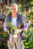 Portrait of confident gardener holding potted plant at garden stock images