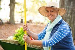Portrait of confident gardener with tool and wheelbarrow at garden stock photo