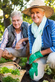 Portrait of confident gardeners at vegetable garden royalty free stock images