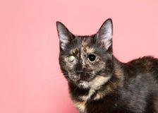 Portrait of a congenitally blind tortie kitten royalty free stock photo