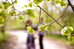 Portrait of  couple through the branches in a summer park Stock Images