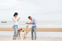 Portrait of a couple with dogs Royalty Free Stock Images