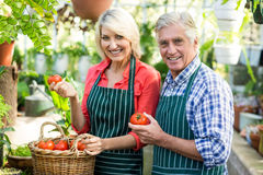 Portrait of couple with tomatoes at greenhouse Stock Images
