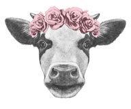 Portrait of Cow with floral head wreath. Hand drawn illustration Royalty Free Stock Images