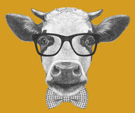 Portrait of Cow with glasses and bow tie. Royalty Free Stock Images