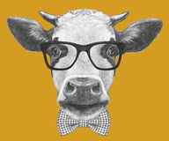Portrait of Cow with glasses and bow tie. Stock Photo