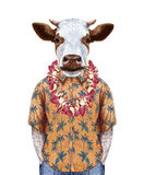 Portrait of Cow in summer shirt with Hawaiian Lei. Hand-drawn illustration, digitally colored Royalty Free Stock Photo