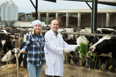 Portrait of cowgirl and mature doctor. Working in cowhouse Stock Photography