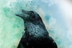 Portrait of a Crow bird, watercolor painting Royalty Free Stock Photo