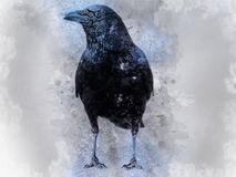 Portrait of a Crow bird, watercolor painting Stock Image