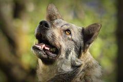 Portrait curieux mignon de chien Photographie stock libre de droits