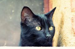 Portrait curious black cat. Portrait curious funny black cat stock images