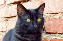 Portrait curious black cat. Portrait curious funny black cat royalty free stock image