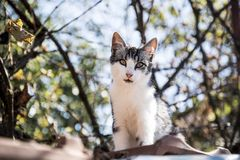 Portrait of a curious and gentle cat. On the roof of a house royalty free stock photo