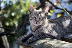 Portrait of a curious and gentle cat. On the roof of a house royalty free stock images