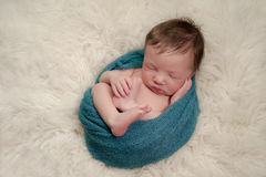 Portrait of a Curled Up, Sleeping Newborn Baby Boy Stock Photography