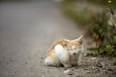 Portrait of cute adorable ginger small white young cat kitten with closed eyes sitting dreaming outdoors on small pebbles posing. On blurred light colorful stock image