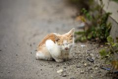 Portrait of cute adorable ginger small white young cat kitten with closed eyes sitting dreaming outdoors on small pebbles posing. On blurred light colorful stock photo