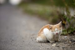 Portrait of cute adorable ginger small white young cat kitten wi. Th closed eyes sitting dreaming outdoors on small pebbles posing on copy space background stock photo