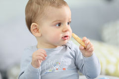 Portrait of cute baby boy eating biscuit Royalty Free Stock Photography