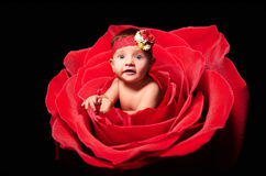 Portrait of cute baby girl, peeping out of rose Stock Photo