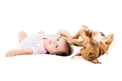 Portrait of a cute baby and puppy pit bull, lying on the back Royalty Free Stock Images