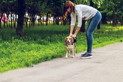 Portrait of cute beagle dog in the park at summer time. Funny pet portrait. stock photo
