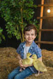 Portrait of a cute boy with goslings on hands on the farm Royalty Free Stock Photography