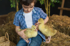 Portrait of a cute boy in a shirt that stroking of geese on the farm Stock Photography