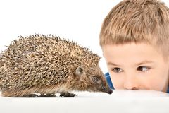 Portrait of a cute boy watching a hedgehog stock photo