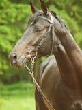 Portrait of  cute breed stallion around pine Stock Photo